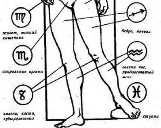 зодии, човешко тяло, управление, Козирог